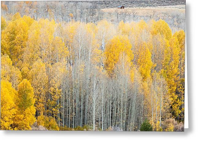 Aspen In Eastern Sierra's  Greeting Card by Sheri Van Wert