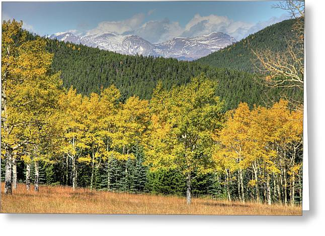 Aspen In Fall Mt Evans Greeting Card
