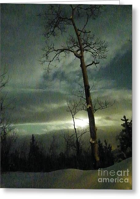 Aspen In Moonlight Greeting Card