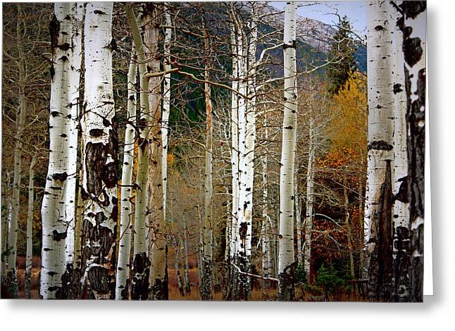 Aspen In The Rockies Greeting Card