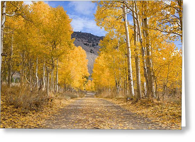 Aspen Lane Wide Crop Greeting Card