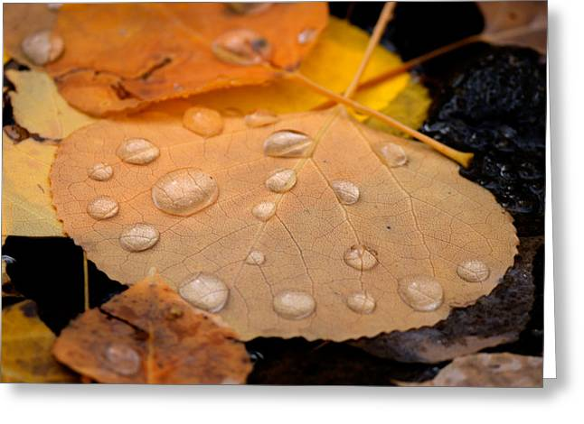 Aspen Leaf With Water Drops Greeting Card