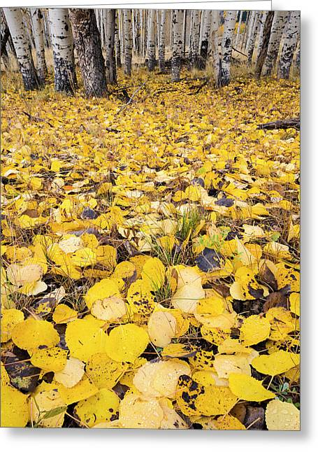 Aspen Leaves Fallen On Ground Greeting Card