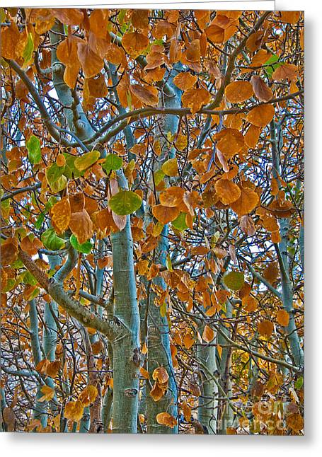 Greeting Card featuring the photograph Aspen Leaves In The Fall by Mae Wertz