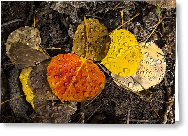 Aspen Leaves On Bishop Creek Greeting Card by Joe Doherty