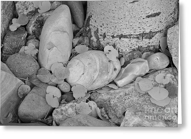 Aspen Leaves On The Rocks - Black And White Greeting Card