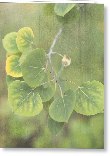 Aspen Leaves Greeting Card by Sheri Van Wert