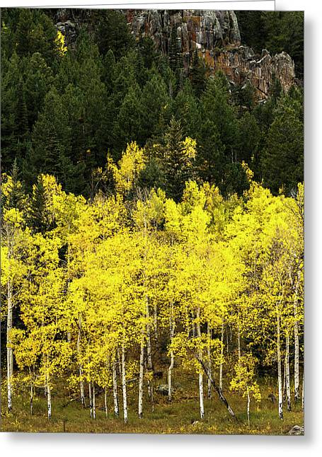 Aspen Leaves Turning Near The Colorado Greeting Card