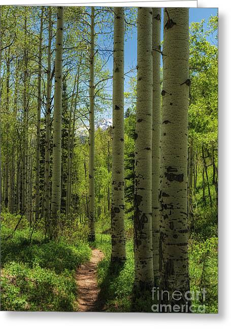 Aspen Lined Hiking Trail Greeting Card by Mitch Johanson