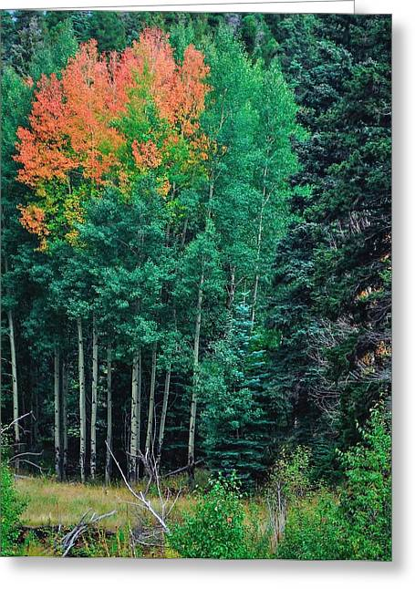 Aspen-orange Before Yellow Greeting Card by Larry Bodinson
