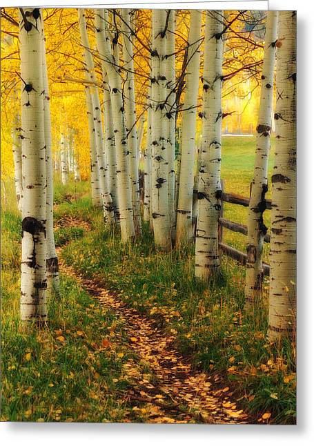 Greeting Card featuring the photograph Aspen Path by Ronda Kimbrow