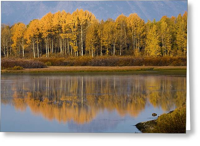 Greeting Card featuring the photograph Aspen Reflection by Sonya Lang