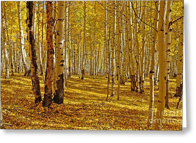 Aspen Sanctuary Greeting Card