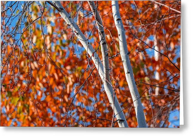 Aspen Greeting Card by Sebastian Musial