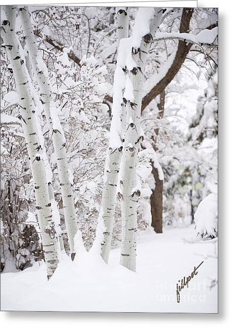 Aspen Snow Greeting Card