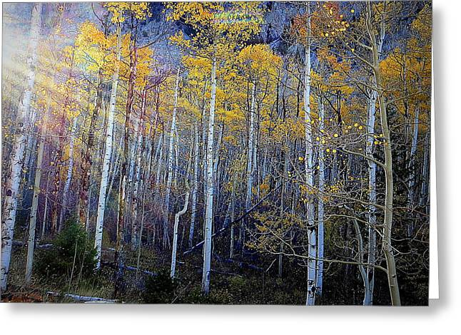 Greeting Card featuring the photograph Aspen Sunset by Karen Shackles