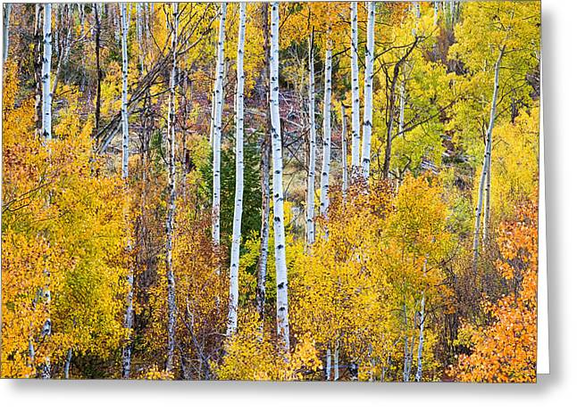 Aspen Tree Magic Greeting Card by James BO  Insogna