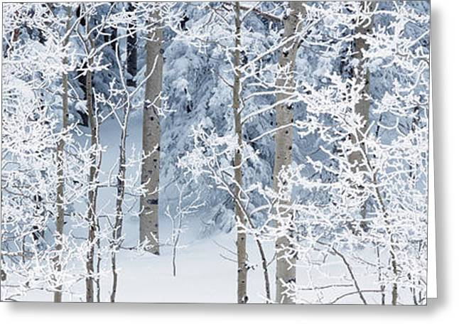 Aspen Trees Covered With Snow, Taos Greeting Card by Panoramic Images