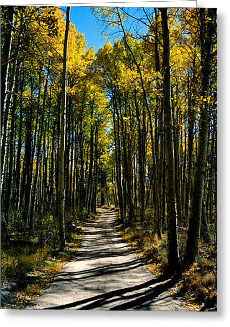 Aspen Trees In A Forest, Californian Greeting Card