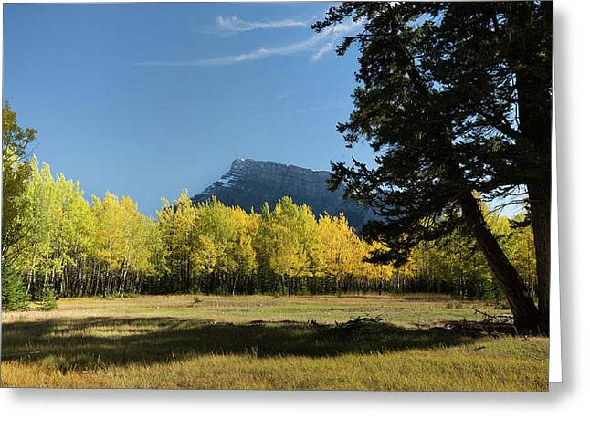 Aspen Trees In Autumn, Mount Rundle Greeting Card