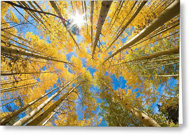 Aspen Trees Looking Up Greeting Card by John Hoffman