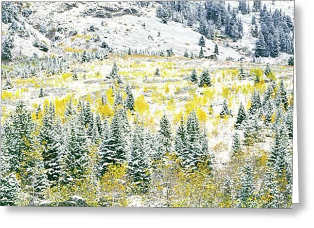 Aspen Trees On Mountain Greeting Card by Panoramic Images