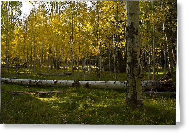 Greeting Card featuring the photograph Aspens 4619 by Tom Kelly