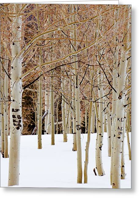 Aspens And Snow Greeting Card by Southwindow Eugenia Rey-Guerra
