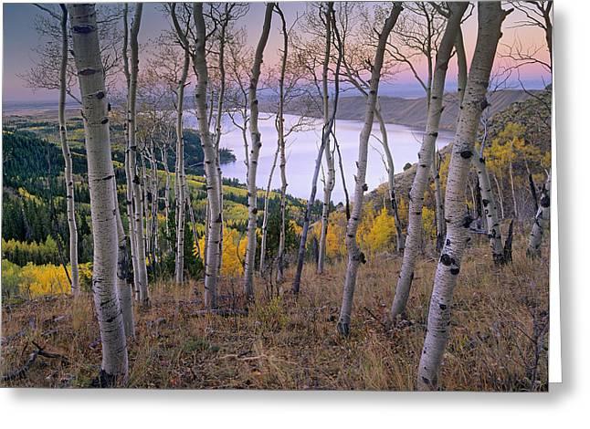 Aspens At Fremont Lake Bridger-teton Greeting Card by Tim Fitzharris