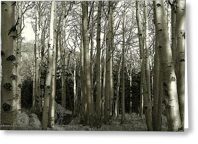 Aspens Black And White Greeting Card