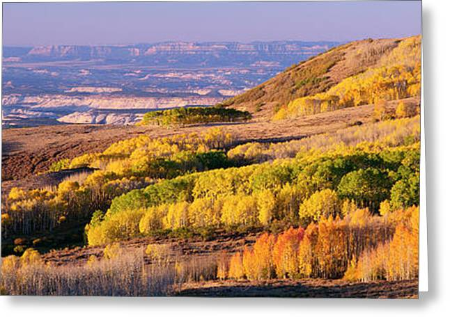 Aspens Dixie National Forest Utah Usa Greeting Card