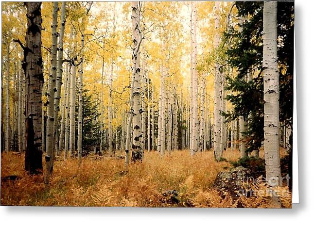 Greeting Card featuring the photograph Aspens by Fred Wilson