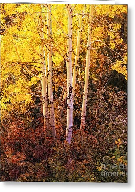 Aspens In Autumn Greeting Card by Nancy Marie Ricketts