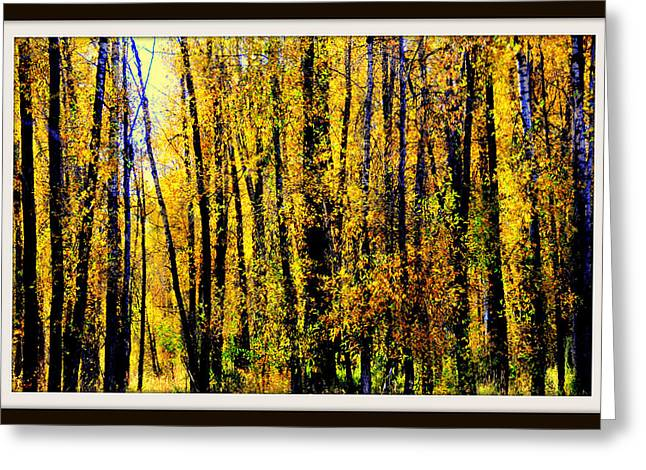 Aspens In Yellowstone National Park Greeting Card