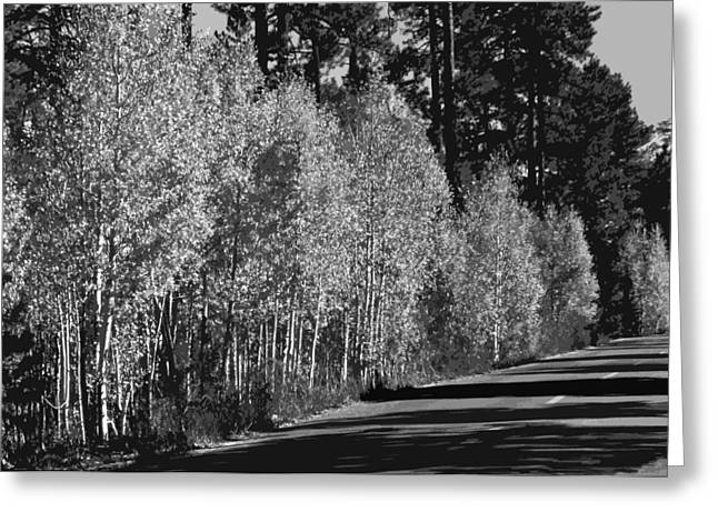Aspens Greeting Card by Jack McAward