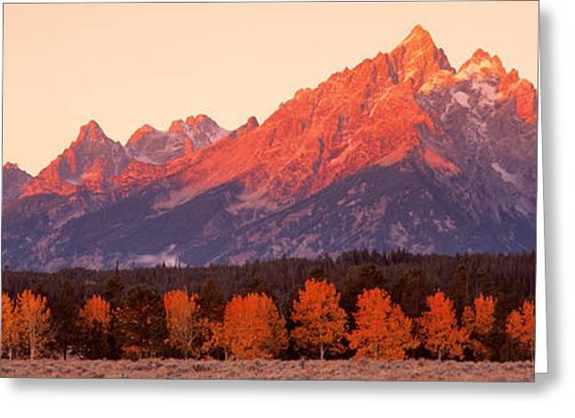 Aspens, Teton Range, Grand Teton Greeting Card by Panoramic Images