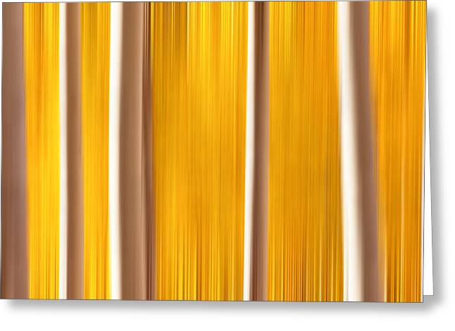 Aspens True Colors Greeting Card by Darren  White