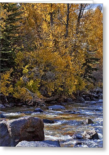 Aspens With Creek Greeting Card
