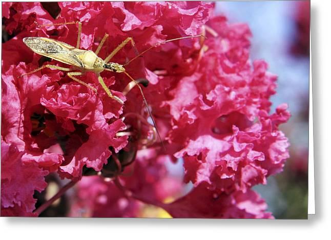 Assassin Bug Greeting Card by Jason Politte