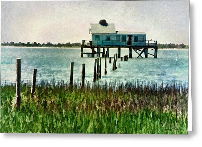 Assateague Abandon Greeting Card