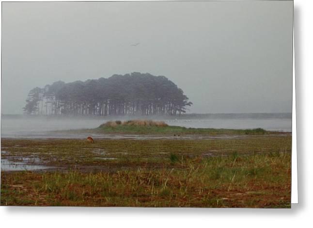 Assateague Fog Greeting Card by Joann Renner