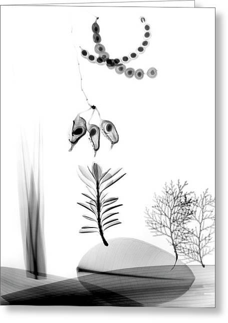 Assorted Plants Greeting Card by Albert Koetsier X-ray