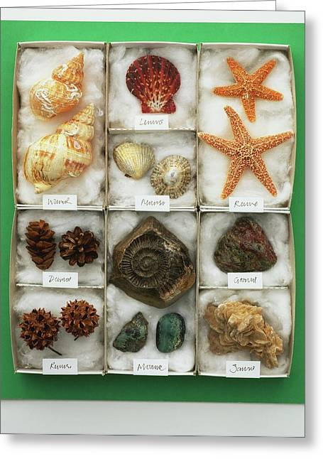 Assorted Sea Shells Displayed In A Tray Greeting Card