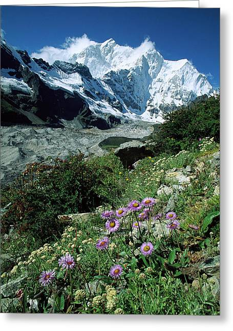 Aster Daisys At Mt. Chomolonzo Greeting Card