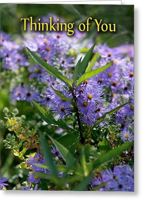 Aster Greeting Card Greeting Card by Linda Phelps