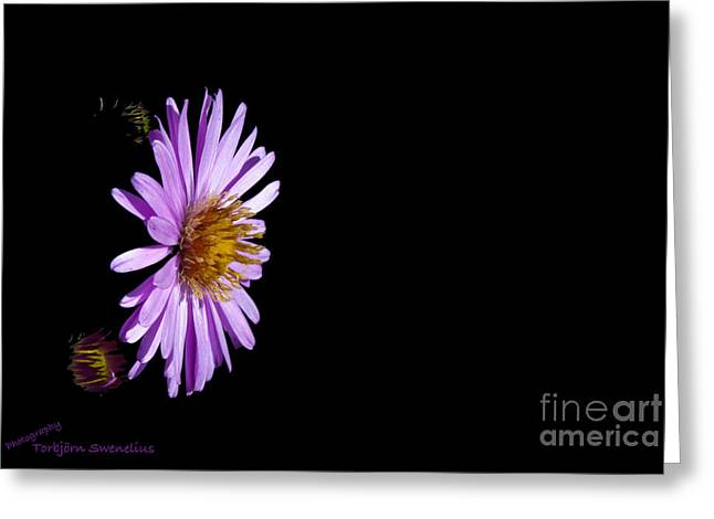 Aster In Black Greeting Card by Torbjorn Swenelius
