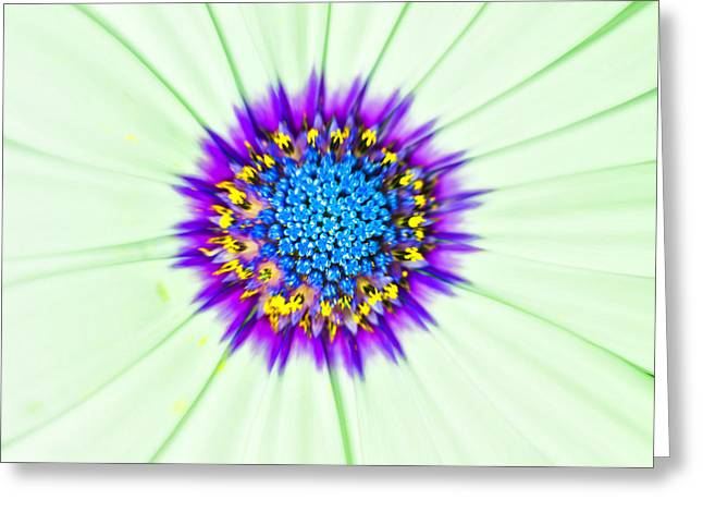 Aster Number Two Greeting Card