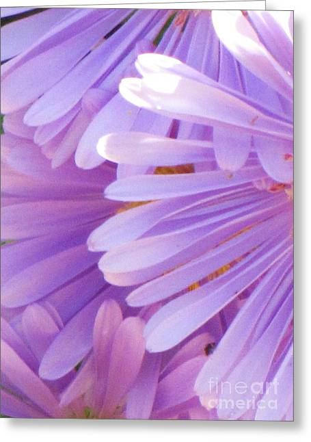 Greeting Card featuring the photograph Aster Petals by Michele Penner