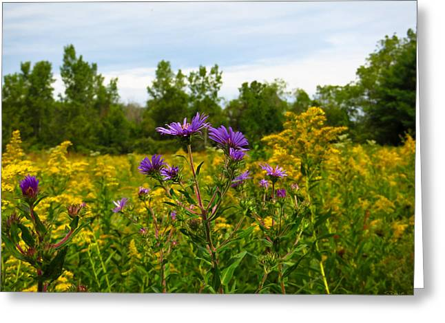 Asters And Goldenrod Greeting Card by Shawna Rowe