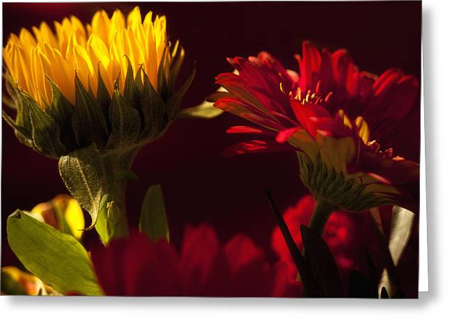 Asters In The Light Greeting Card by Andrew Soundarajan